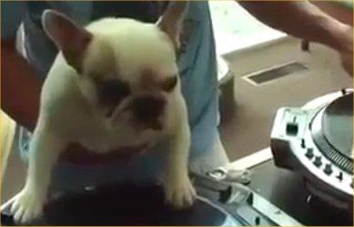 dog-competes-with-human-dj